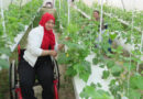 الفاو تطلق مشروع ترشيد المياه عبر الزراعة المائية المقننة و الأحيومائية