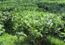 Crop Pretction