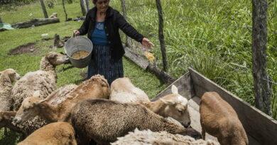معالجة مقاومة مضادات الميكروبات وتحقيق خطة التنمية المستدامة لعام 2030