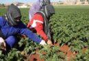 كورونا يزيد تحديات العمال في قطاع الزراعة