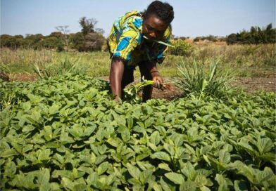 Small family farmers produce a third of the world's food