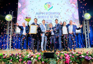 Anthura BV, the Netherlands, wins AIPH International Grower